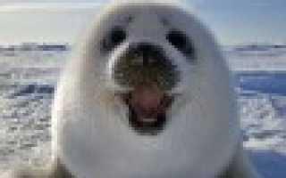 Методы защиты конфиденциальных статистических данных